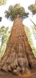 Belightful Tree